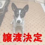 bisuko-j