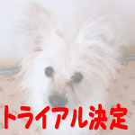 kinjiro-t