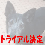 kurosuke-t