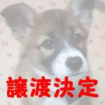lukasu-j