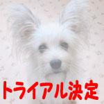 monjiro-t