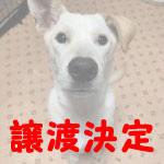 tanjiro-j